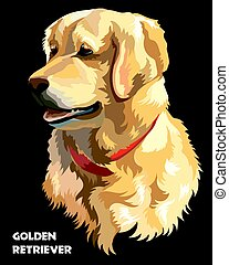 Colorful Vector Golden retriever - Colorful isolated vector...