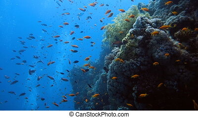 School of tropical fish in a colorful coral reef