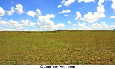 maasai mara national reserve savanna at africa - nature,...