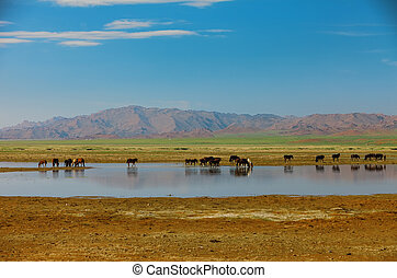 Herd horses on watering place. Mongolia Altai