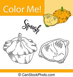 Education coloring page with vegetable. Hand drawn vector illustration of squash