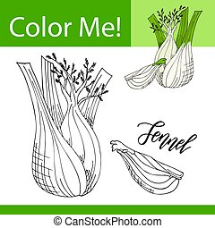 Education coloring page with vegetable. Hand drawn vector illustration of fennel.
