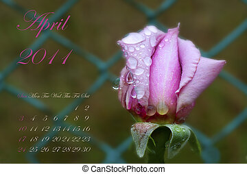 April 2011 - Page of 2011 calendar for April, with pink rose...
