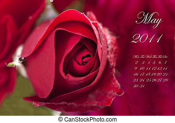 May 2011 - Page of 2011 calendar for May, with red rose