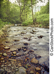 Forest river cascades - Beautiful forest river motion...