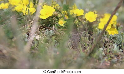 Wind idea. Spring flowers on a meadow. - Beautiful spring...