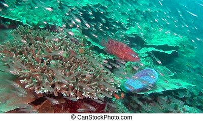School of fish on background colorful corals underwater in...