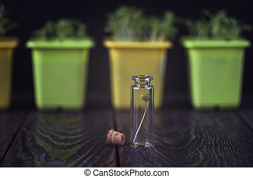 Rukkola plant in a test-tube, plant cultivation....