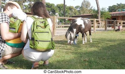 A family with a baby examines a pony near an enclosure. A little horse is very pleased with a little boy