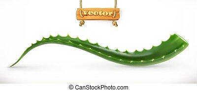 Aloe vera. Medicinal plant, 3d vector icon