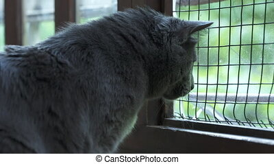 House cat looking out the open window with protective wire...