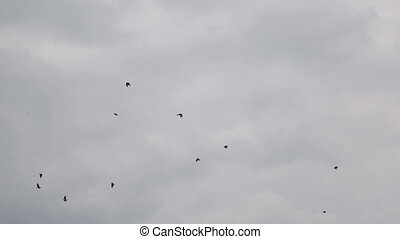 A flock of crows in the gray sky - Crows on a cloudy...