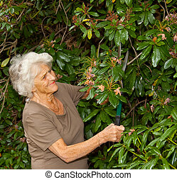 Cutting Back The Bushes - Senior lady gardener doing a...