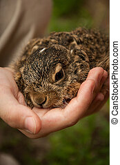 A little hare in the hands of a child.