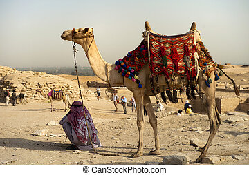 Camel on desert with arabian man