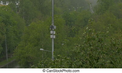 Large drops of rain fall on the trees. Strong wind. - Large...