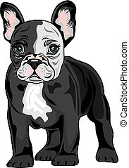 French Bulldog. Vector illustration