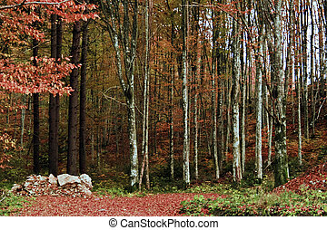 Autumn in forest 2 - Somewhere on the road between Anina and...