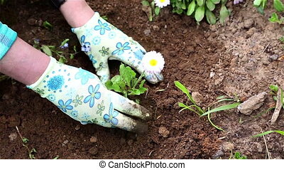 Woman planting a flower on a flower bed