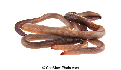 worms isolated on white background closeup