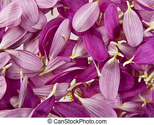 lilac flower petals as a background