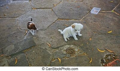 Two Little Puppies Play Together on Pavement - FAIRY...