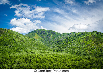 moky Mountains Landscape