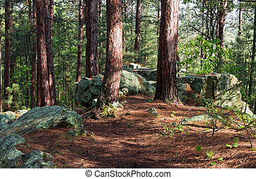 Rock Outcrop on Woodland Trail - rock outcrop along woodland...