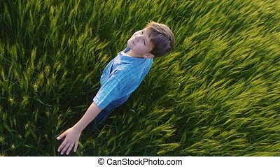 Boy is spinning in a field of wheat and touching the green ears