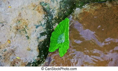 Macro Camera Shows Small Leaf in Water by Stone - Macro...