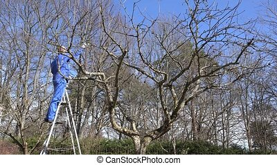farmer man stand on ladder and cut fruit tree branches with...