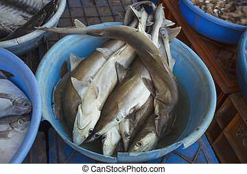 Sale of sharks in the markets of different cities of Goa and...