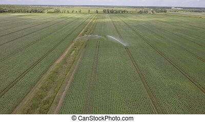 Aerial view:Irrigating machine in a potato field -...