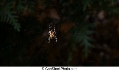 Spider in web at closeup - Spider in spiderweb at closeup,...