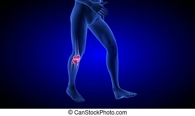 Knee Pain animation. Blue Human Anatomy Body 3D Scan render...