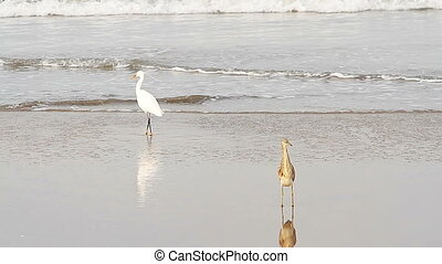 heron on a tropical sea beach