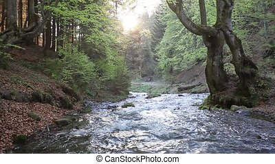 Waterflow in deep forest - Static forest landscapes with...