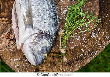 Seasoning sea bream with herbs for grill