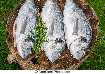 Preparing whole sea bream with herbs for grill