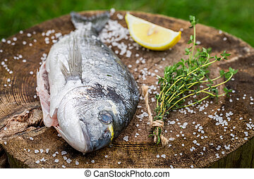 Whole sea bream with lemon and herbs for grill