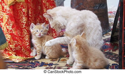 Homeless Red Cat with Kittens Licked on the Street. Slow...