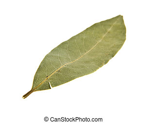 Bay leaf isolated on white background