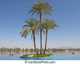 Large date palm tree on island in infinity swimming pool -...