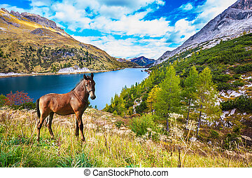 Well-groomed horse calmly rest in the lake