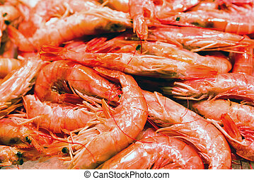 Sea food - red scampi - Fresh sea food- red scampi in...