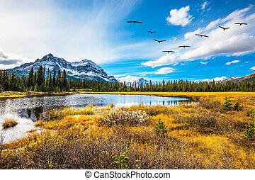 völgy, felett, repülés, falka, madarak