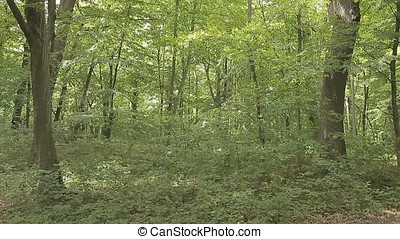 POV Pan to Sky Middle of Overgrown Forest - Middle of...