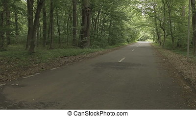 Empty Asphalted Forest Road High POV