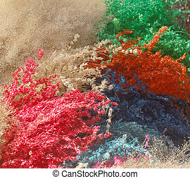Extracto, imagen, secado, hierbas