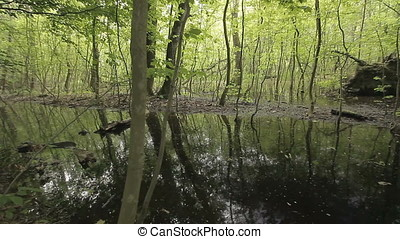 Tree Remnant in Swamp at Sunset - Tree remnant in swamp at...